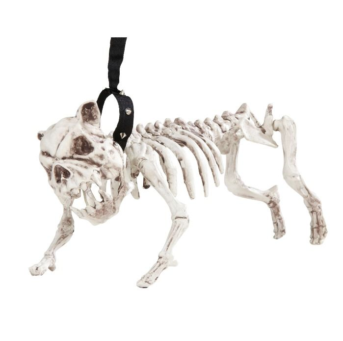 cane-scheletro